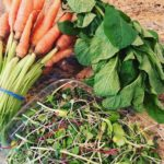 Healing With Farmers' Market