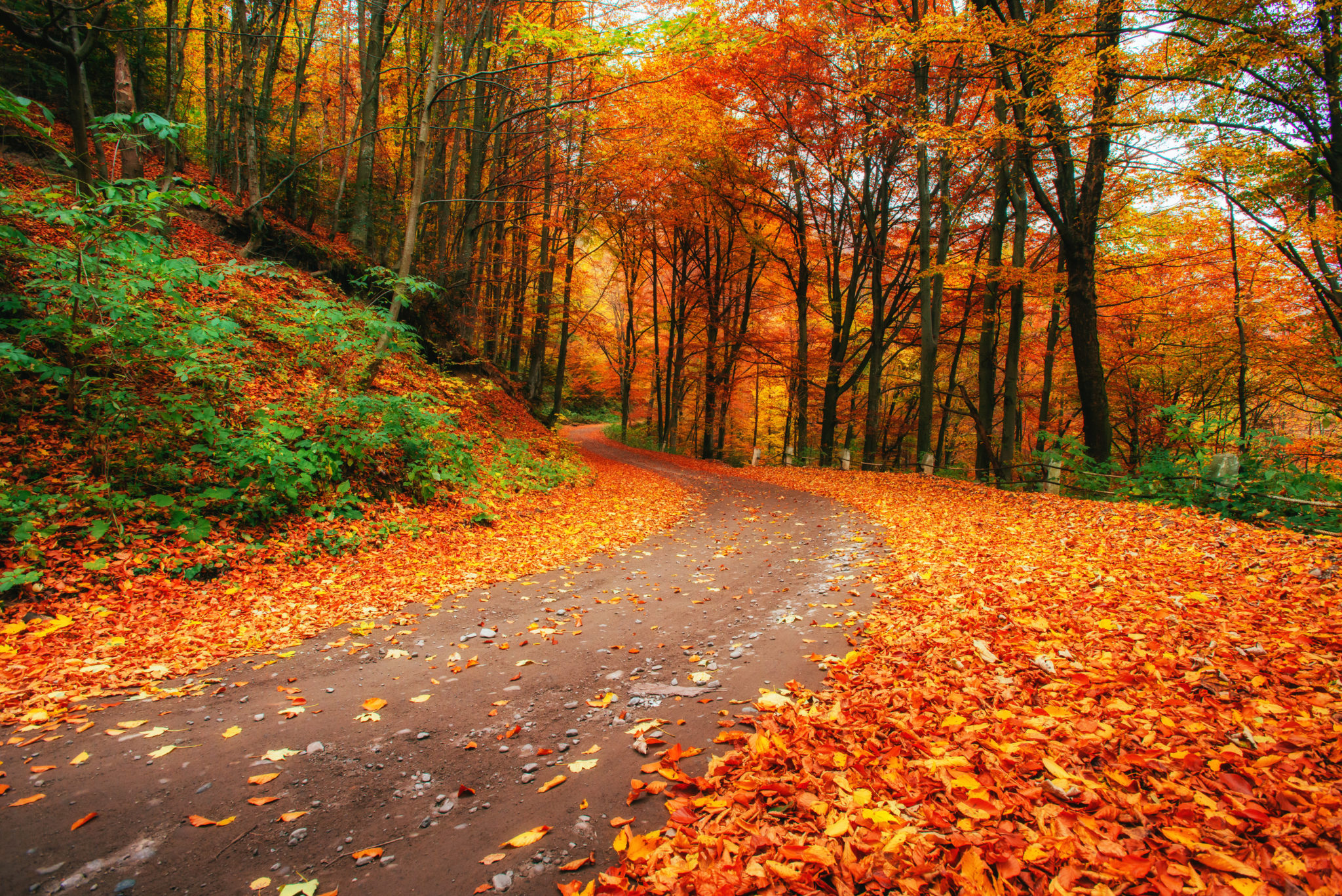 Favorite Autumn Walks in the Greater Puyallup Area 1